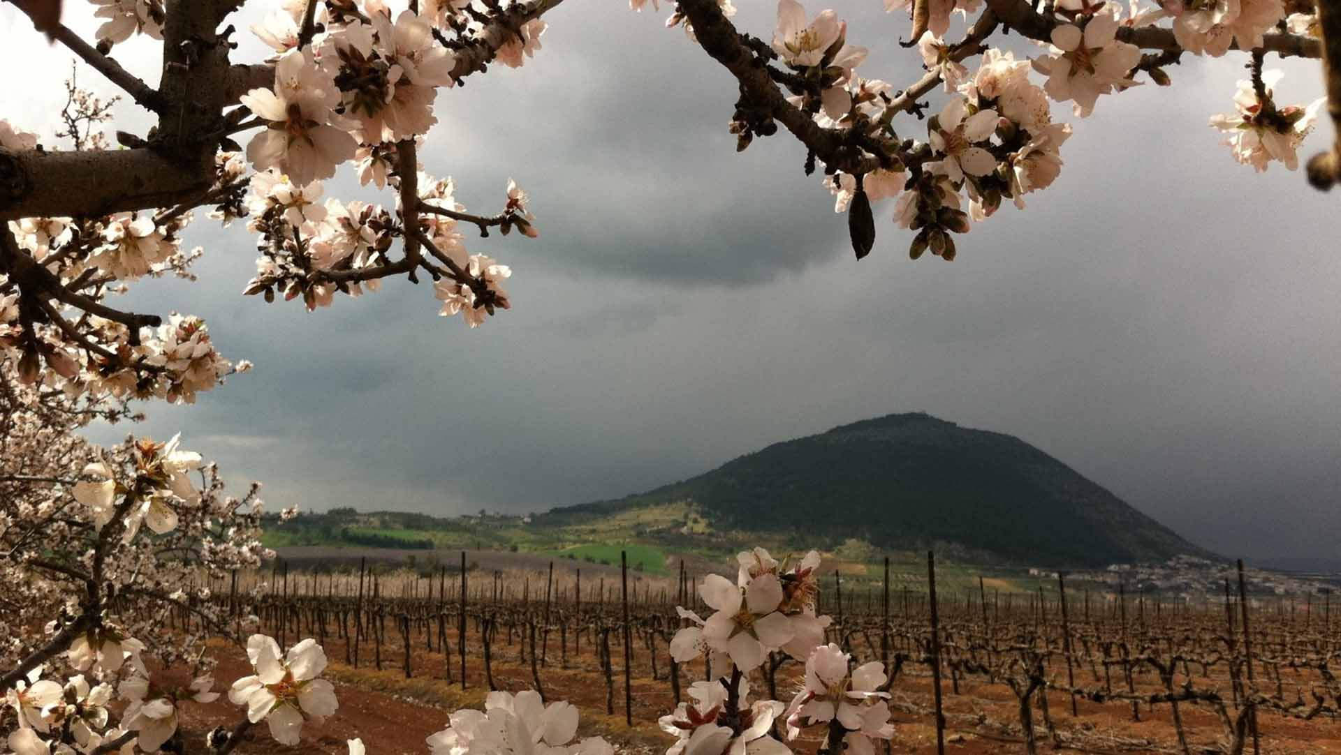 الموسم الزراعي في الجولان المحتل في مواجهة الكساد والاحتلال